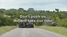 Kruger National Park, Elephants, The Creator, Sleep, Peace, Happy, Ser Feliz, Elephant, Sobriety