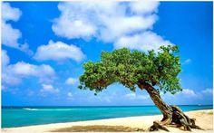 Beach Tree Landscape Wallpaper | beach tree landscape wallpaper 1080p, beach tree landscape wallpaper desktop, beach tree landscape wallpaper hd, beach tree landscape wallpaper iphone