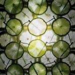 Back to Light: Artist Caleb Charland Uses Fruit Batteries to Illuminate Long-Exposure Photographs