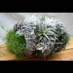 plant-circle winter