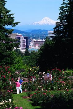 Portland Rose Garden, Portland, Oregon home sweet home Oregon Travel, Travel Usa, Travel Portland, Oregon Washington, Portland Oregon, Oregon Living, State Of Oregon, Planting Roses, Beautiful Places In The World