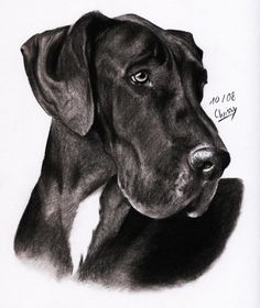 First of all a big thanks to ~MelloYello for allowing me to use this beautiful picture of a great dane as reference for this drawing : [link] Done with . Great Dane Dogs, Cute Dogs, Weimaraner, Black Great Danes, Mermaid Drawings, Dog Paintings, Cool Pets, Illustrations, My Animal