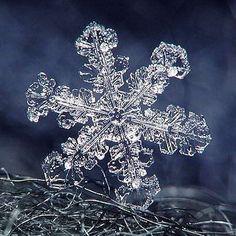 Wonderful Snowflakes – Virtual University of Pakistan I Love Snow, I Love Winter, Winter Snow, Frozen Bubbles, Snowflake Images, Frozen Snowflake, Ice Art, Snow Pictures, Crystal Snowflakes