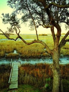 Charleston, SC in the Gullah/Geechee Nation