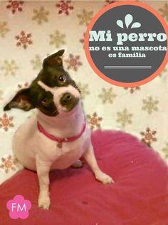Mi #Perro es mi familia :)