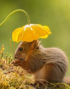 It's not everyday you see an adorable red squirrel wearing a flower as a hat, but that's what makes photography so great.