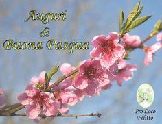 Auguri di Buona Pasqua anno 2012