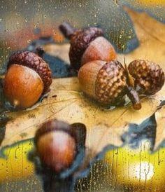 """""""L'automne est un deuxième ressort où chaque feuille est une fleur"""". """"Autumn is a second spring where every leaf is a flower"""" Albert Camus         @Bazaart"""