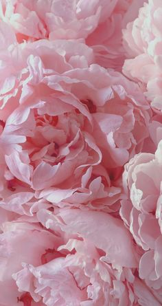 Pretty In Pink Iphone Wallpaper Peonies Wallpapers Cover Pages Paeonia Lactiflora