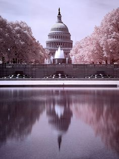 Washington, DC - Been there several times. Next trip will be going to the Cherry Blossom Festival in April.