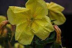 Regentropfen auf einer Blüte, Blumenfotografie Plant Leaves, Plants, Rain Drops, Scenery Photography, Flora, Plant, Planting