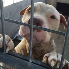 Eight months in a cage - alive, but not living BUTCH has been in this cell for EIGHT MONTHS!  We need to get this boy out ASAP! https://www.facebook.com/photo.php?fbid=1083264205045145&set=a.912448498793384.1073741827.100000847275198&type=3&theater