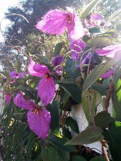 . . . Cabin & Cottage : A Santa Barbara Garden