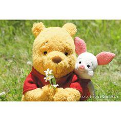 Winnie The Pooh and Piglet Winnie The Pooh Pictures, Cute Winnie The Pooh, Winne The Pooh, Teddy Bear Pictures, Winnie The Pooh Quotes, Winnie The Pooh Friends, Teddy Bear Toys, Cute Teddy Bears, Pooh Bear