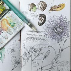 Sketchbook field sketchbook for today, with the drop in temperatures it has been great to go exploring Sketch Journal, Artist Journal, Artist Sketchbook, Art Journal Pages, Nature Sketch, Nature Drawing, Botanical Drawings, Botanical Art, Watercolor Journal