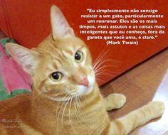 """""""Eu simplesmente não consigo resistir a um gato, particularmente um ronronar. Eles são os mais limpos, mais astutos e as coisas mais inteligentes que eu conheço, fora da garota que você ama, é claro."""" (Mark Twain)"""