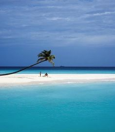 Photo via: Elsa Young // House and Leisure Beautiful shot of a Halaveli Island beach in the Maldives. With the snow looming in NYC, I a...