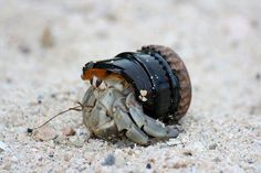 Hermit Crab, recycling.