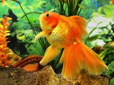 Dicas de Feng Shui: localizações para aquários em casa | #peixes #NaturezaemCasa #BoasEnergias