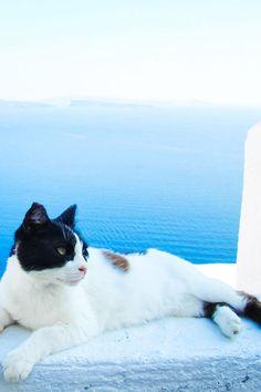 Lazy Cat Day in Santorini, Greece