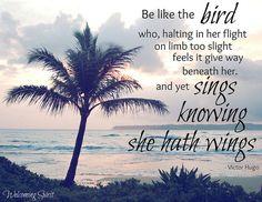 115 Best Bird Quotes Images Messages Bible Scriptures Bible Verses