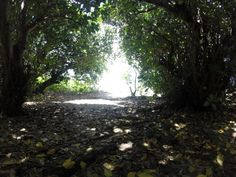 Walking through the bush to the beach from The Hideaway, Eua Island, Tonga – Viatori #travel #euaisland #travelpics #bush #tonga