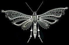 Noháček článkovitý z čeledi retičelovitých - fotoalba uživatelů - Dáma. Butterfly Cross Stitch, Butterfly Embroidery, Simple Art, Easy Art, Teneriffe, Insect Art, Cut Work, Lace Making, Bobbin Lace