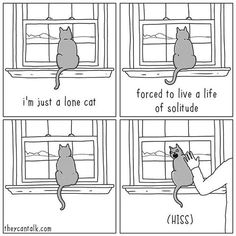 Cat Contradictions Time     http://onlineclock.net/sounds/?sound=Cat-Meowing  #Caturday #CaturdayEveryday #FunnyCat #FunnyCats #CuteCats #CatPics #LolCats #FunnyPics #Cat #Cats #Caturday #CaturdayEveryday #Pets #CatLovers #Kittens #Catstagram #CatsOfInstragram #CatsOnInstagram #CatSelfie #Kitty #CatsRuleEverythingAroundMe #Pets