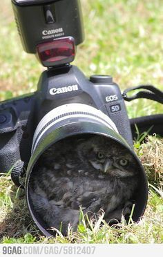 The hazards of wildlife photography - a burrowing owl decides your camera looks like a good place to call home. So cute. Baby Animals, Funny Animals, Cute Animals, Wild Animals, Owl Pictures, Funny Pictures, Owl Photos, Random Pictures, Photo Animaliere