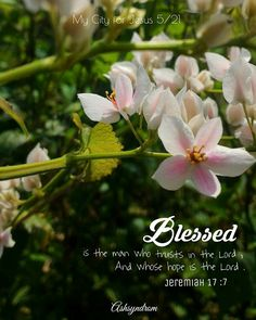 Blessed  is the man who trusts in the Lord , And whose hope is the Lord . Jeremiah 17:7  Happy sunday 😊