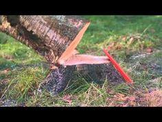 전통적인 나무 벌목 방법 - YouTube