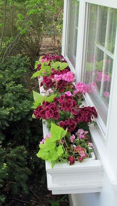 DIY Window Box: The dark, gorgeous deep rasberry Geraniums are the 'Thriller', the pale pink Impatiens and the multi-colored Coleus are the 'Fillers', and the Sweet Potato vines are the 'Spiller'. Beautiful Combination!