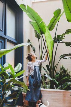 Interiorista que decora con plantas de interior #paisajismo #Paisajismojardinespatio #plantasdecoracion