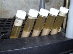 How to Save and Reuse Brewers Yeast - I've always wondered how to do this!