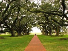 Oak Alley, Vacherie, Louisiana, USA | 45+ Of The World's Most Magical Streets Shaded By Flowers And Trees  Posted By MMK on Jan 25, 2015