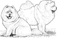 dog color pages printable | Two Chow Chow dogs coloring page | Super Coloring