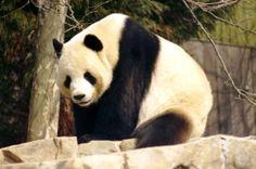 ªMe preocupa más el sufrimiento de un solo animal cautivo que la extinción de toda una especieª | Rafel Àngel Jaume