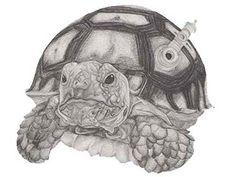 Dibujo Tortuga - Colección de juguetes