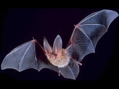 Bat World Sanctuary - A Forever Place for Bats in Need - YouTube