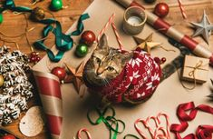 Christmas Cat Photo Ideas For Your Holiday Cards Christmas Photo Cards, Christmas Photos, Holiday Cards, Holiday Decor, Cozy Christmas, Christmas Lights, Christmas Ornaments, Cat Santa Hat, Elegant Gift Wrapping