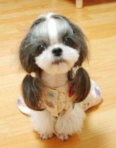 Girly dog