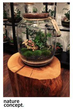 Is Vermiculite Safe For Organic Gardening Build A Terrarium, Bottle Terrarium, How To Make Terrariums, Moss Terrarium, Terrarium Plants, Bottle Garden, Glass Garden, Eco Garden, Indoor Garden