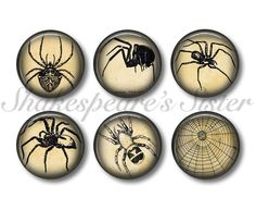 Spider Magnets  Fridge Magnets  Gothic by ShakespearesSisters