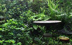 . . . my green haven, alles im grünen bereich