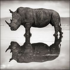 Find the latest shows, biography, and artworks for sale by Nick Brandt. Fusing art and activism, Nick Brandt focuses on the animals that roam Tanzania and Ke… Nick Brandt, Wildlife Photography, Animal Photography, Sunset Photography, Photography Photos, Beautiful Creatures, Animals Beautiful, Majestic Animals, Save The Rhino