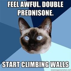 Feel awful. Double Prednisone. Start climbing walls.