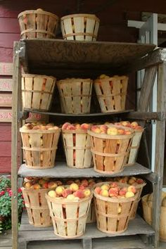 A fine stand of peaches (photo The Tales of E & C blog)