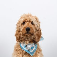 "Finally got new headshots taken for the ""Corporate Governance"" section of our redesigned site. #Harold #HaroldGram #goldendoodle"