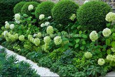 hydrangea garden care Charlotte Rowe G - gardencare Garden Design, Boxwood Garden, Contemporary Garden, Country Gardening, Shade Garden, Hydrangea Garden, Topiary, Family Garden, Garden Care