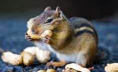 Myth Buster: How Your Healthy Nut Habit Might Be Making You Fat